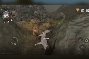 the wolf online versus tiger