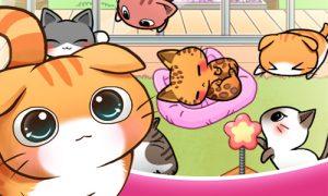 cat room cute hints tricks